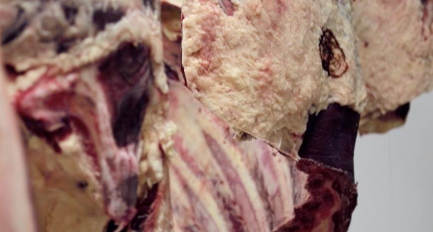 La viande est maturée mais sans excès pour un goût subtil, directement à la ferme - Il est super important de faire reposer la viande dans un frigo bien ventilé pour que la viande s'attendrisse et que son goût s'affine. Il y a une mode à maturer le plus longtemps possible la viande mais c'est pas du tout notre truc : c'est un peu comme le tuning de voiture, ça permet souvent de cacher de la qualité moyenne. On aime notre viande, maturée à sa perfection, au moment où son goût propre se révèle. Donc, maturation douce, environ trois semaines, selon les morceaux. C'est Antho, le #2 du Ponclet qui gère cet art subtil !