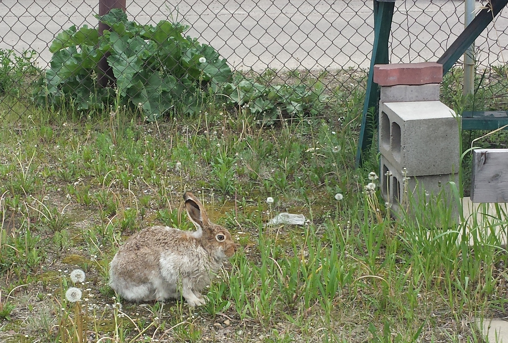 Bunny! This bunny lives behind the  Clayworks Studio-Link