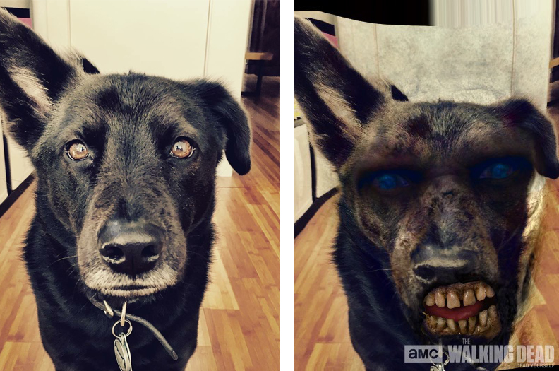 Interesting that my dog's teeth become human teeth once he gets zombified.
