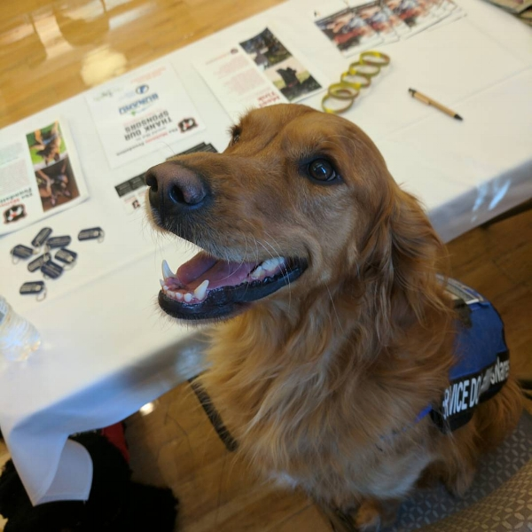 Meet Arrow and our spectacular service animals this summer!