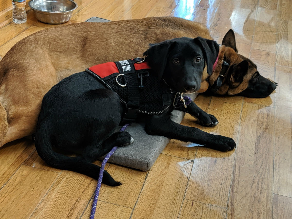 JoJo sits with community outreach dog, Aspen, at the South Salt Lake City Veteran's Appreciation Dinner on July, 3, 2019.