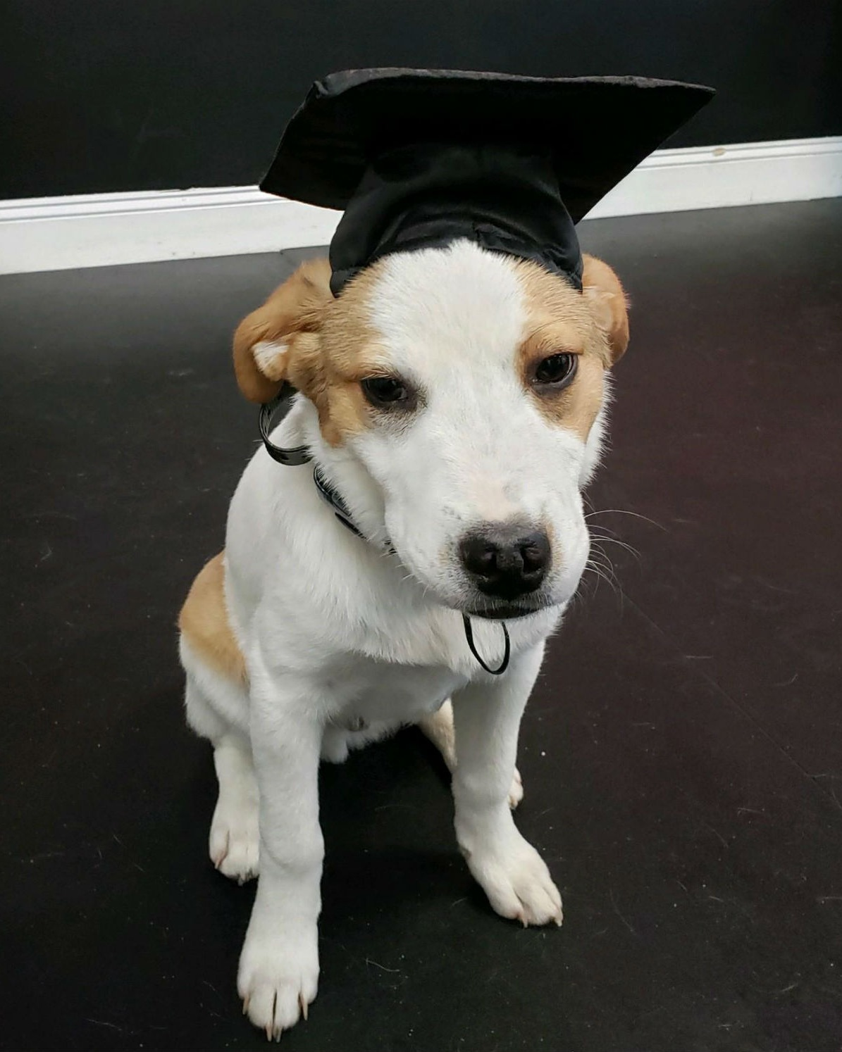 Indy graduates from Puppy School!