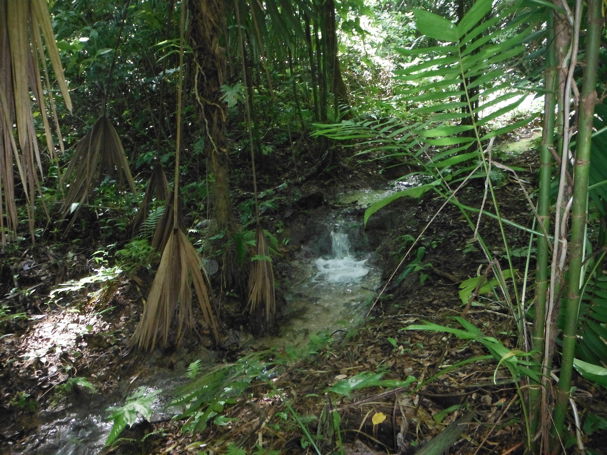 belize_rainforest.JPG
