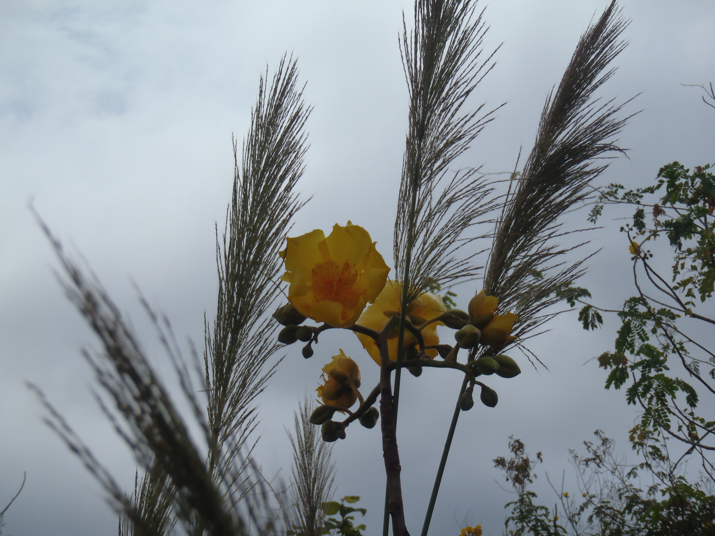 Yellow Flowers Grass.JPG