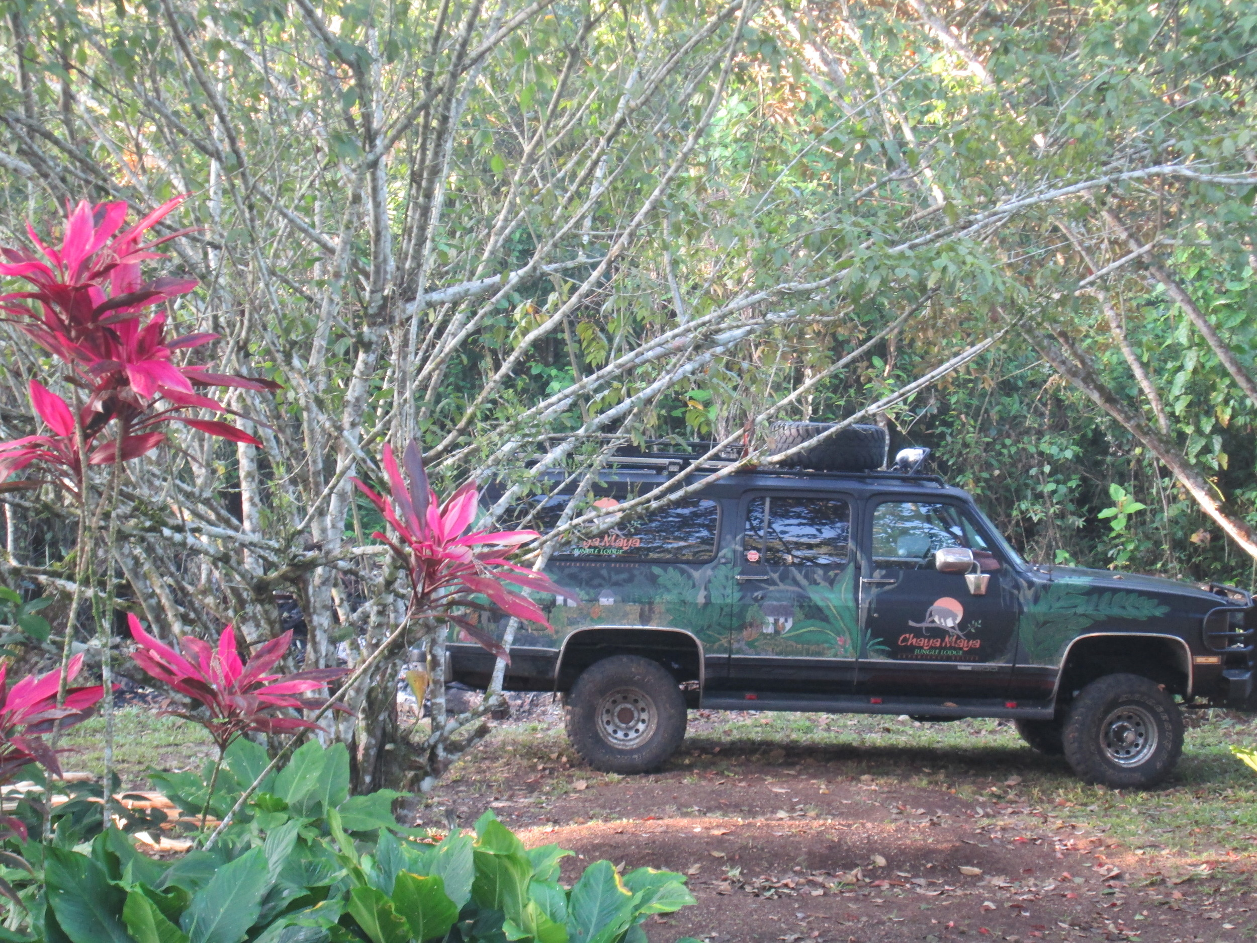 Jungle Truck 2.JPG