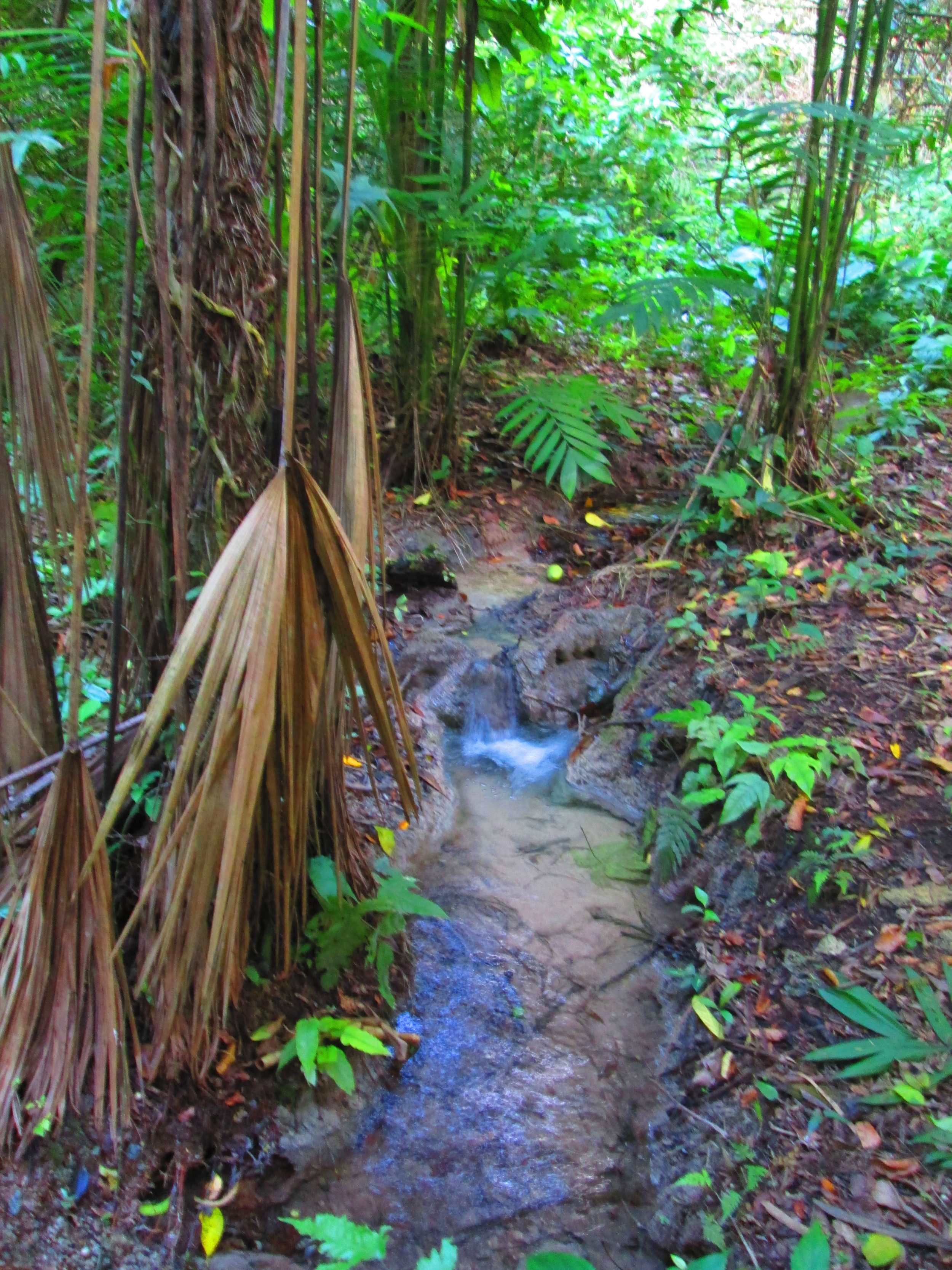 Natural spring creek.JPG