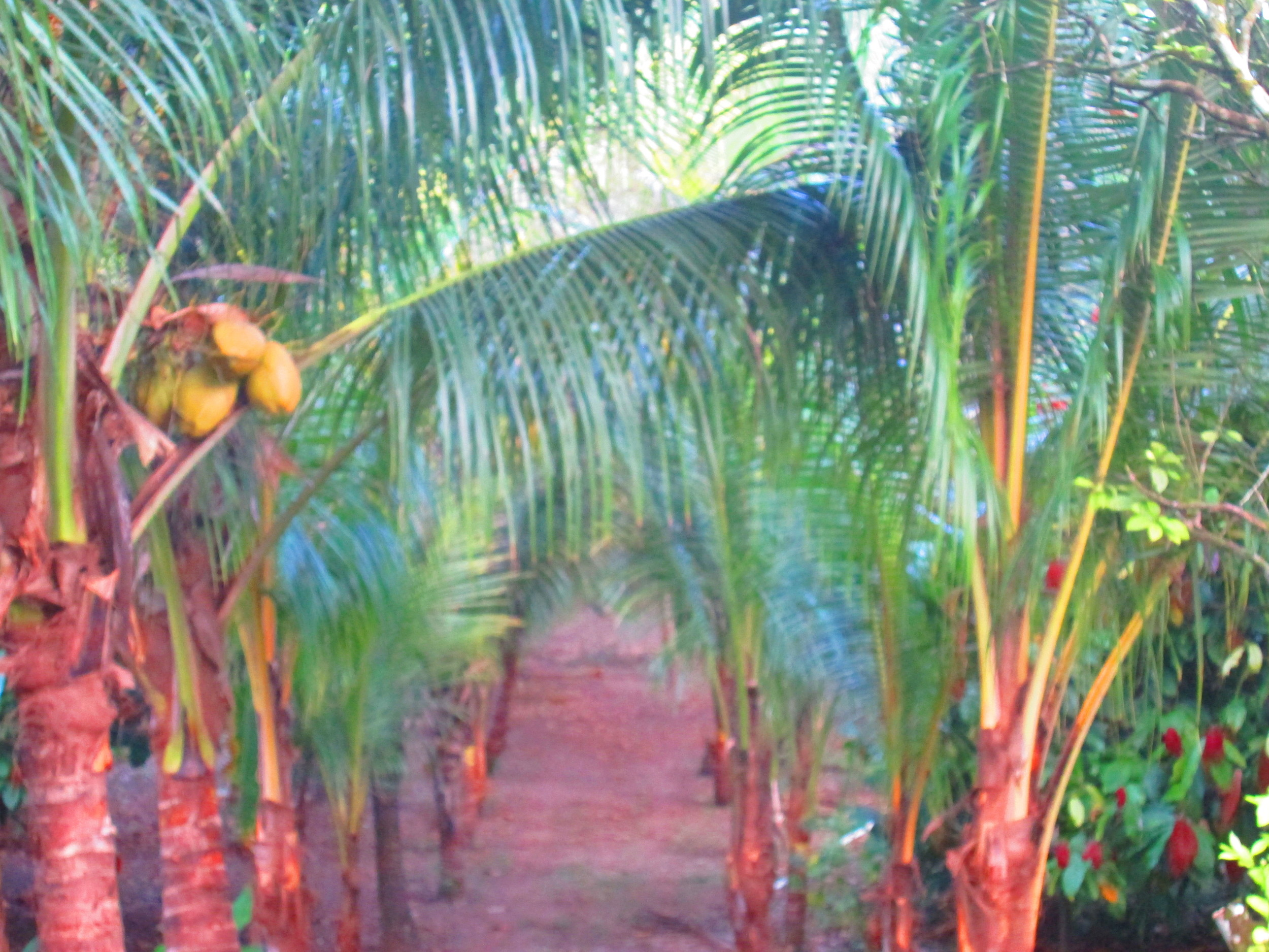 Palm driveway.JPG