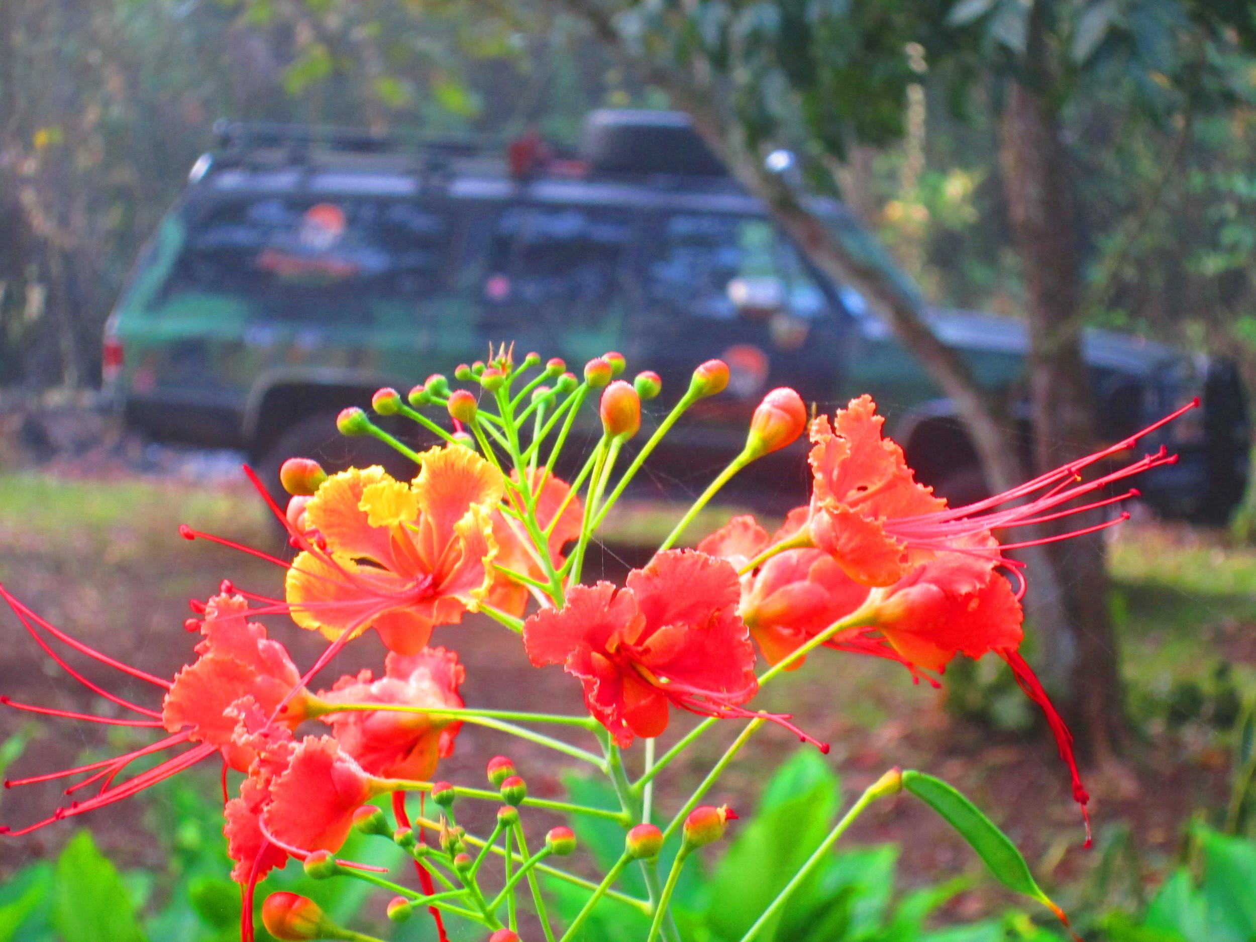 Orange Flowers and Jungle Truck.JPG