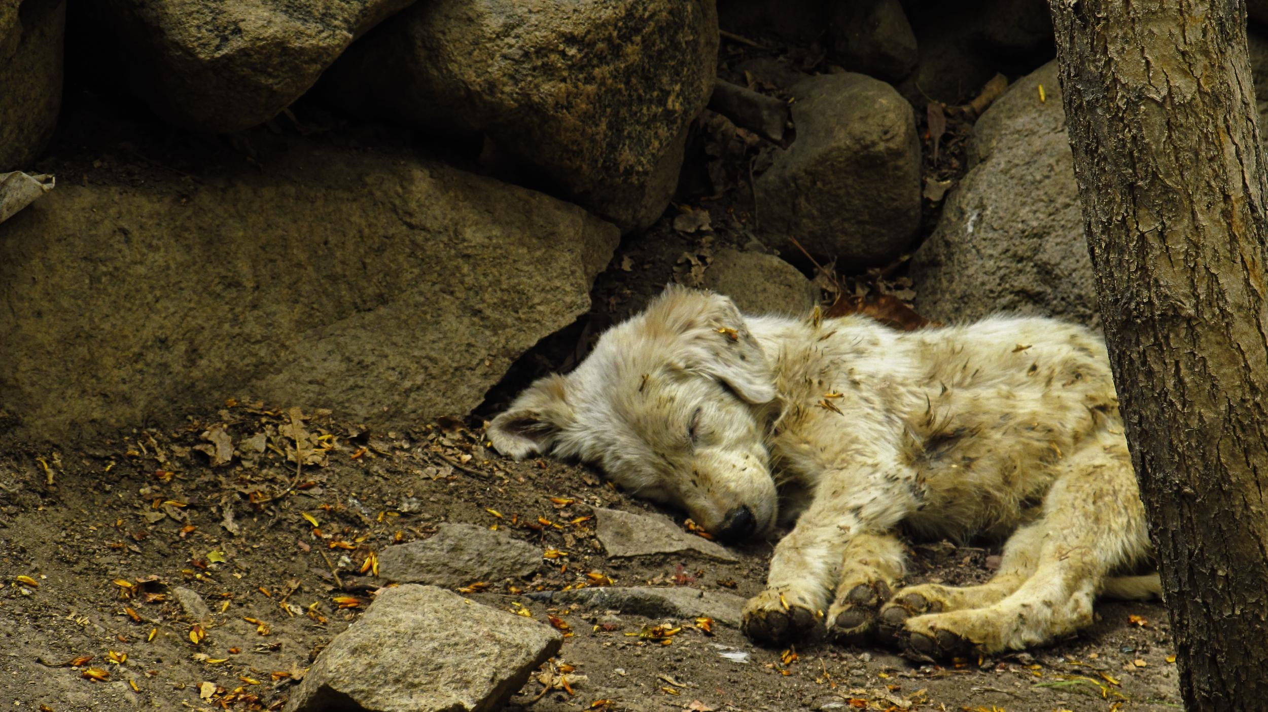 Guillaume BOLDUC, Sleep .