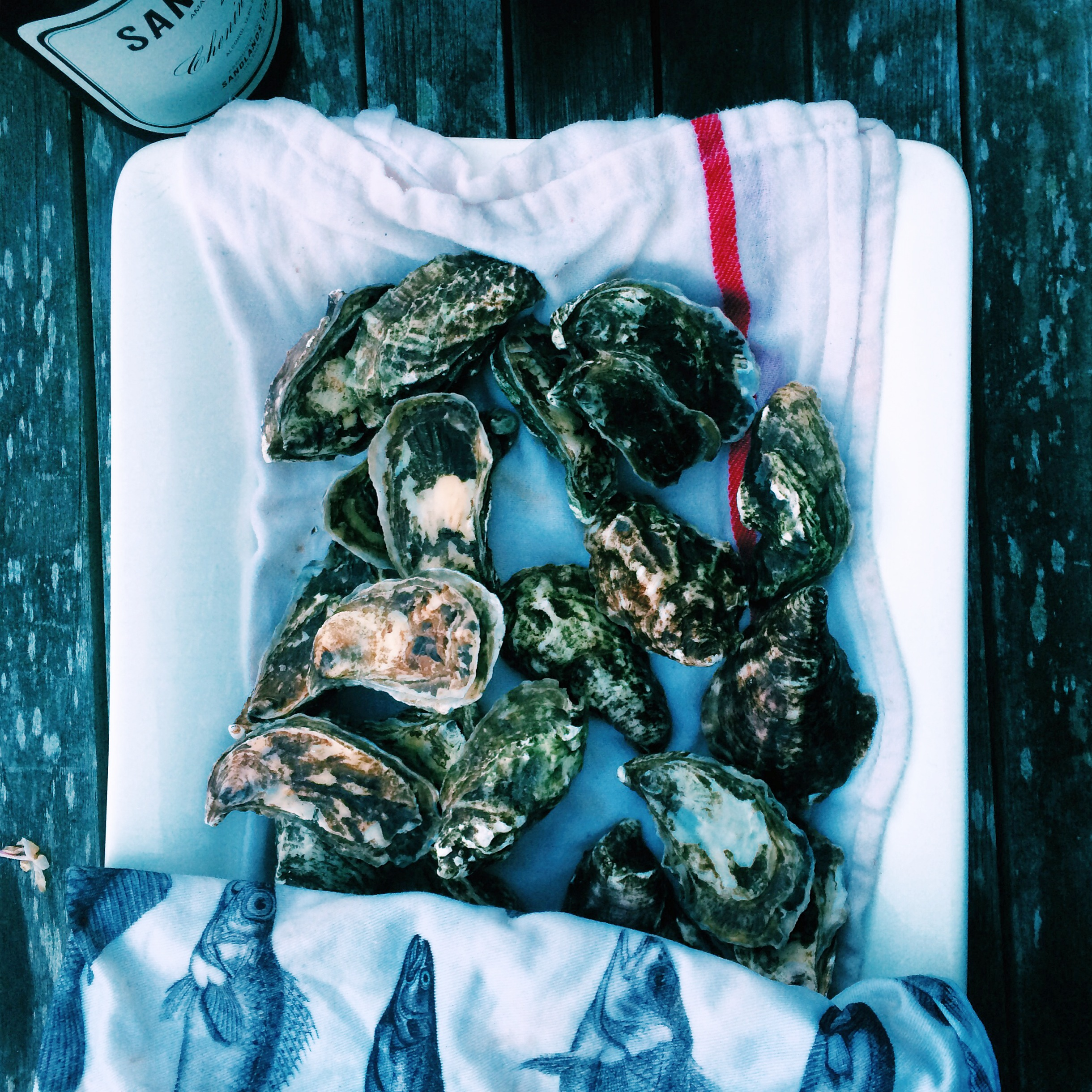 Pacific Coast Oysters