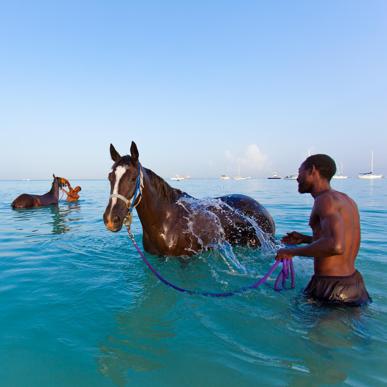 barbados_horses.jpg