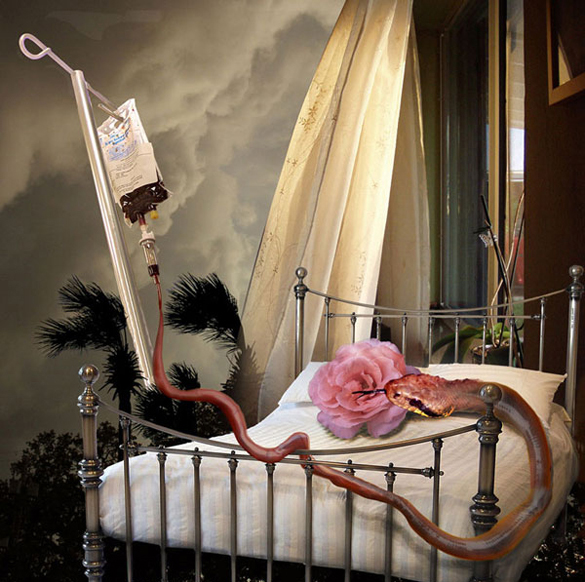 The Sick Rose (after William Blake).  2010.