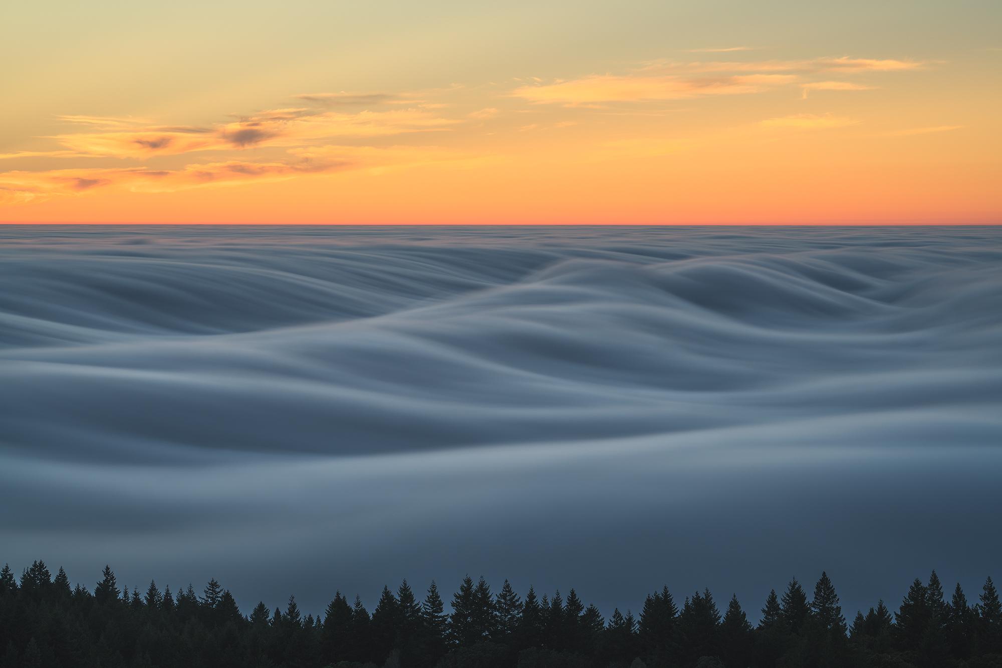 Tam-Fog-1.jpg
