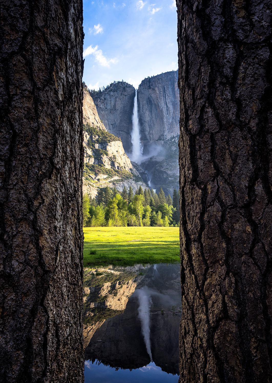 Between-The-Trees-copy.jpg
