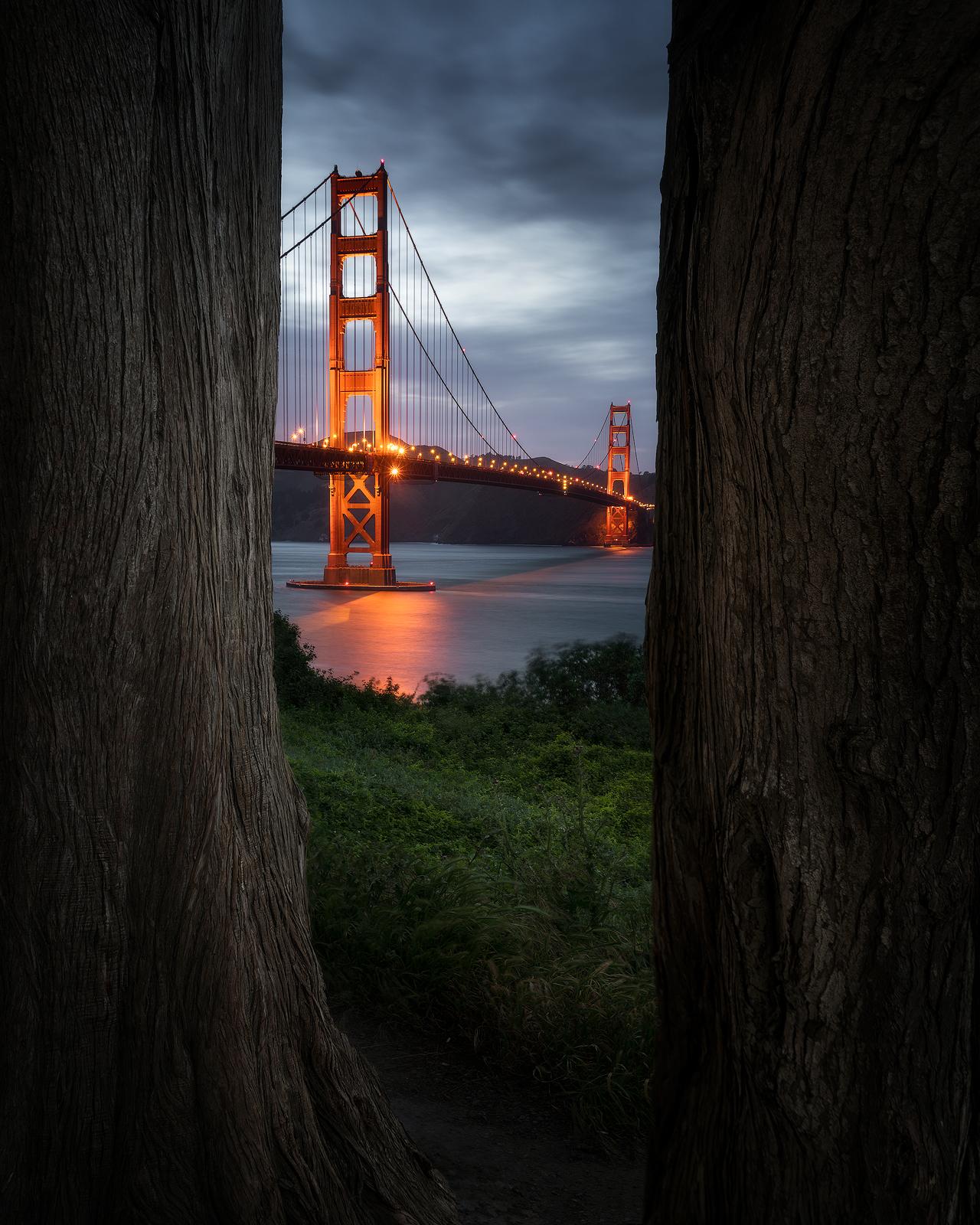 Between-Two-Cypress.jpg