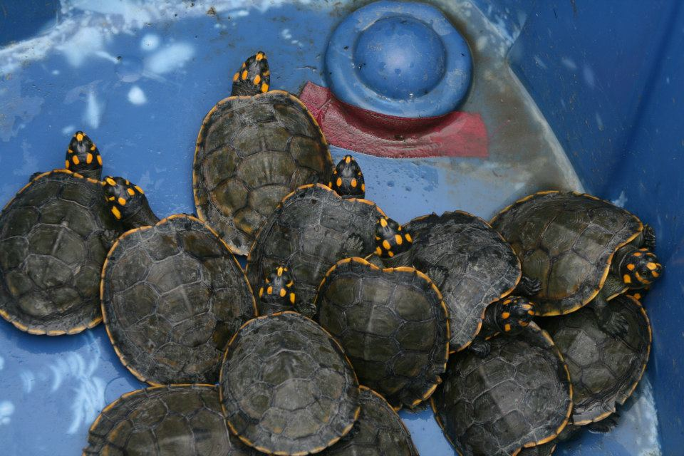 turtles last year.jpg
