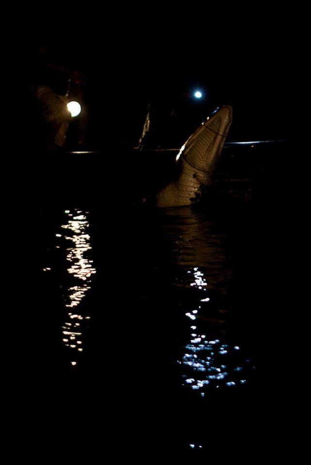 caiman catch at night.jpg