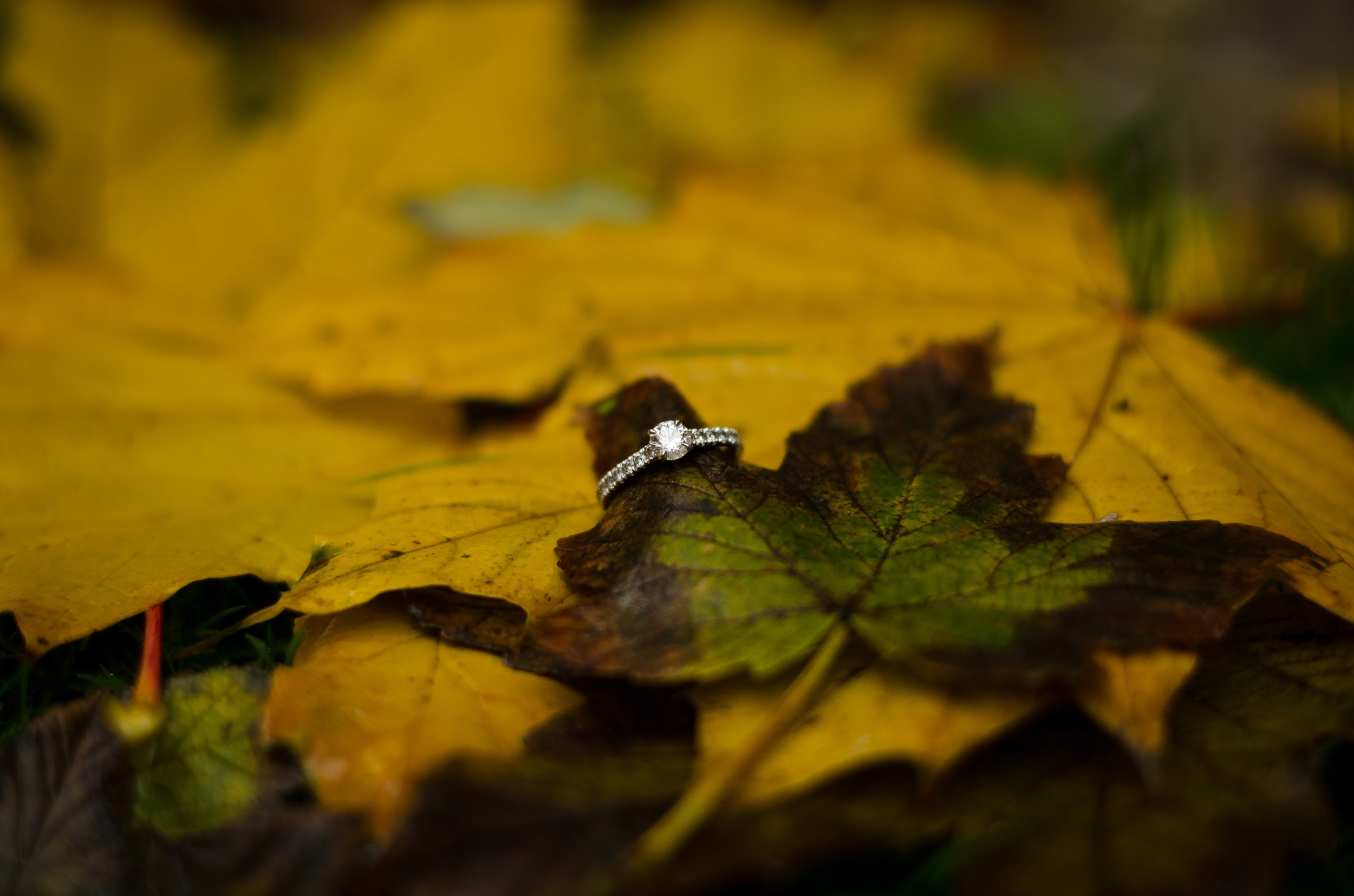 Paris engagement photoshoot in the fall Kat & Ed 5 Nov 2016-6.jpg