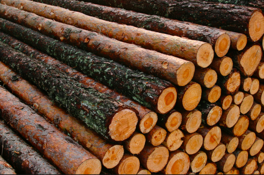 Forestry On Line Videos