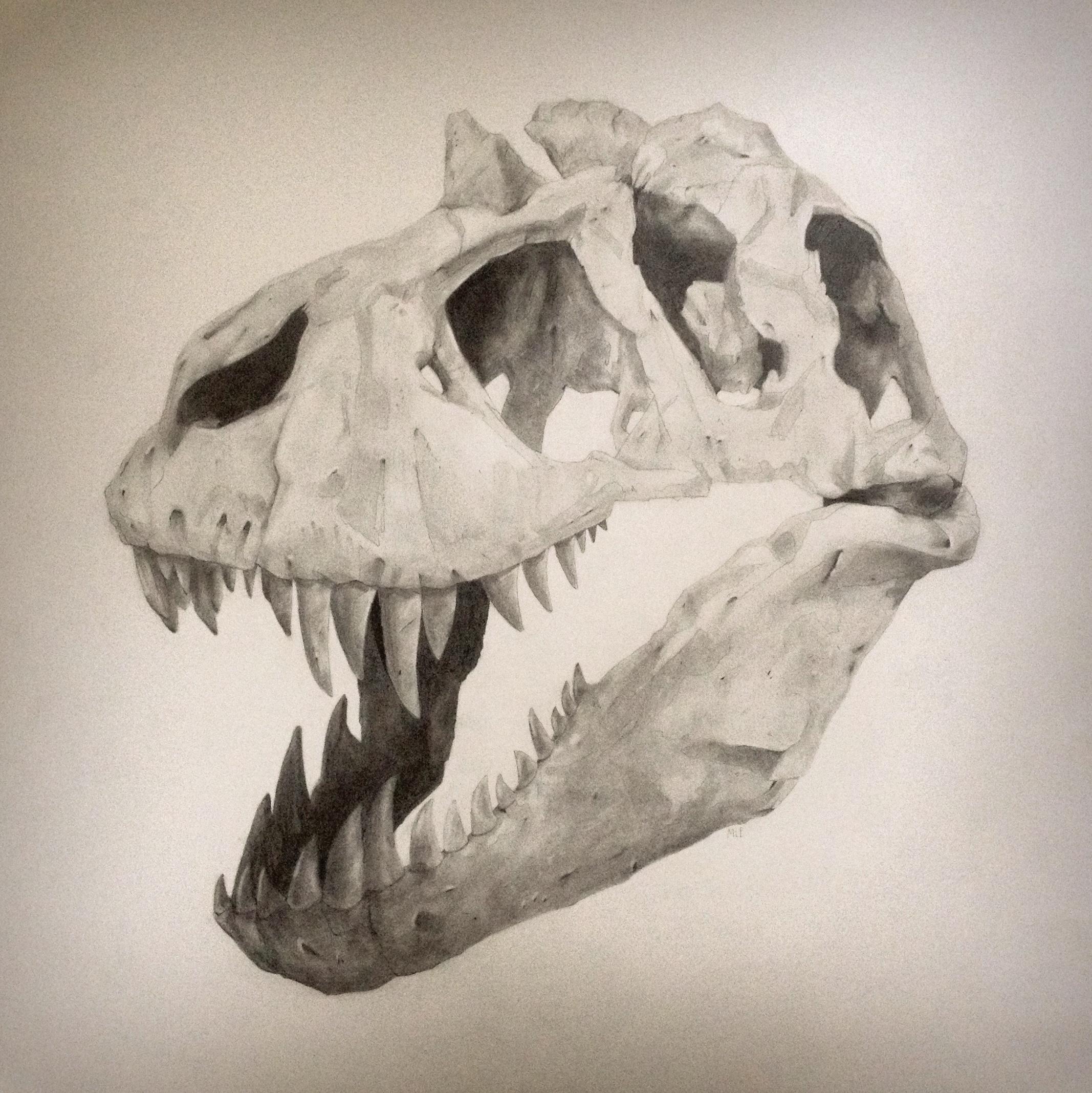 Tyrannosaurus . Graphite on paper.