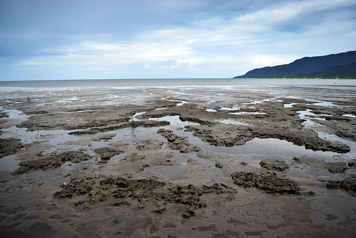 Cairns' mudflats - once a pristine beach, now a thriving ecosystem formangroves and marine wildlife.