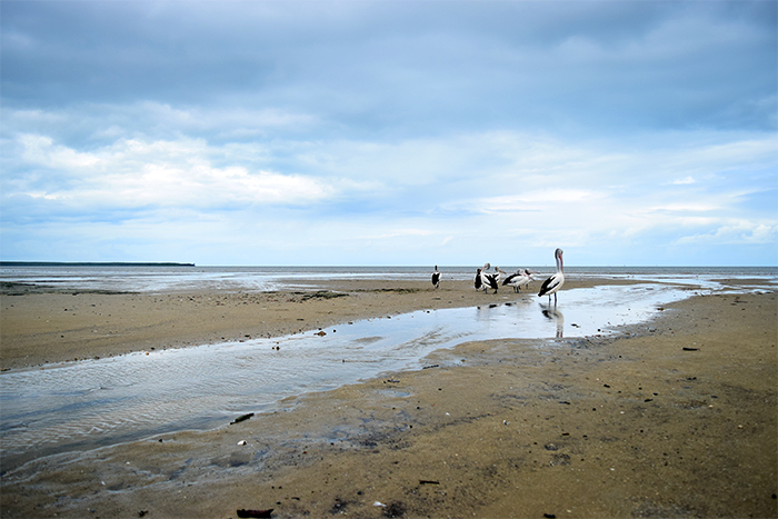 Cairns' mudflats are home to thousands of species of marine life.