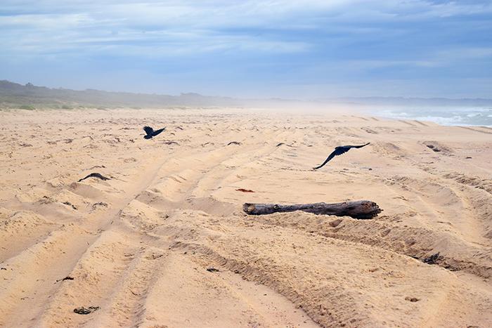 Crow Series: 3