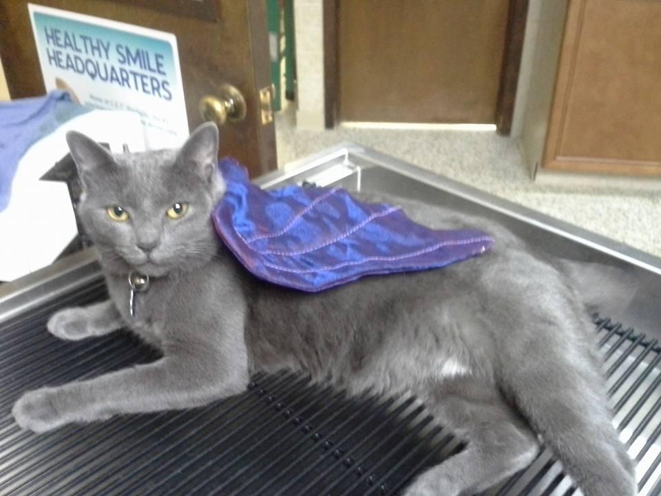 Grey Girl BAT!