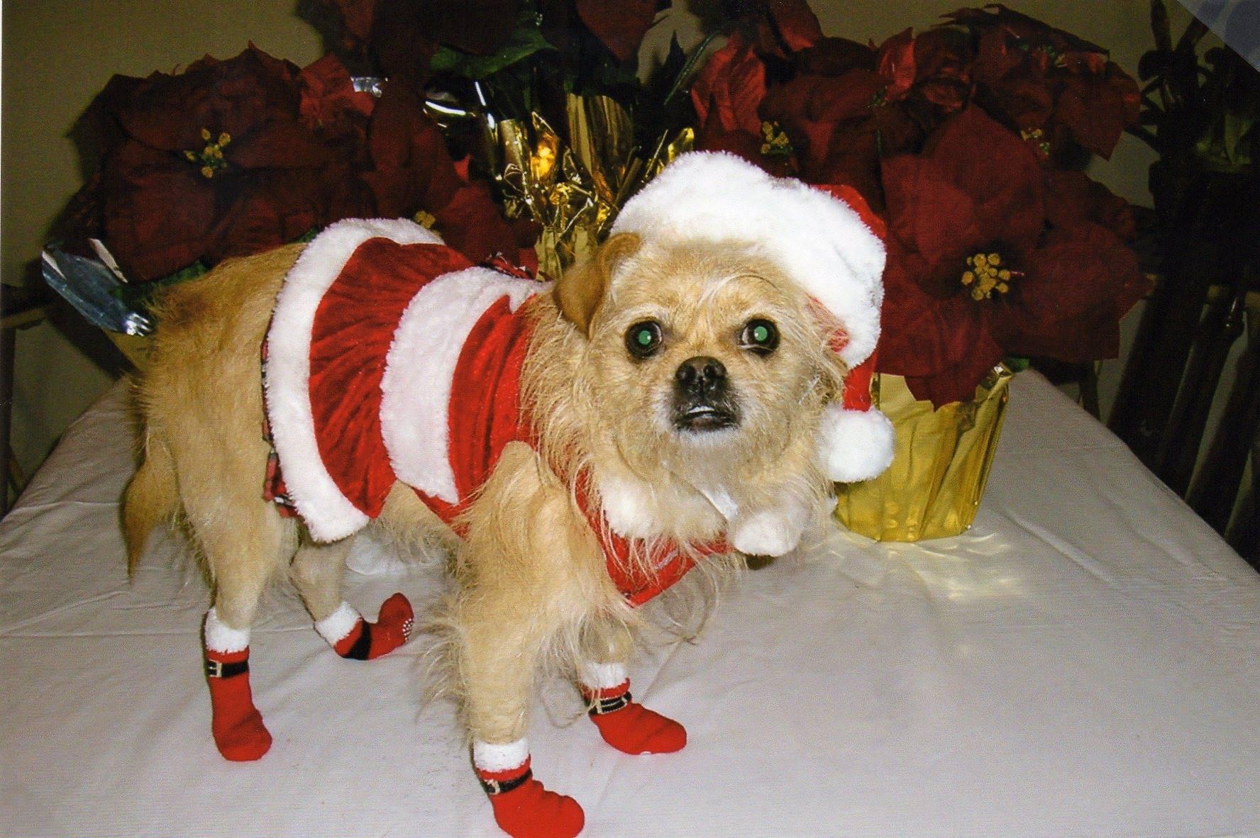 Sweet Haley is ready for Santa!