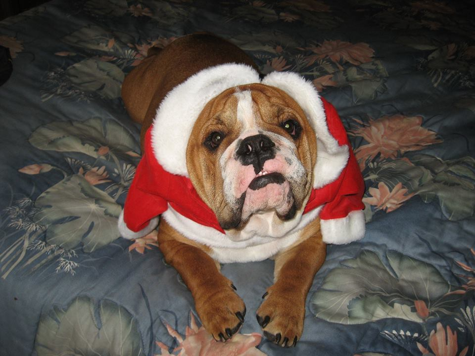 Chesty is too big for that little Santa coat!
