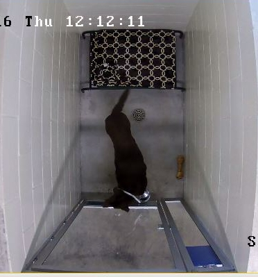 Click      to view your pet on our 24 hour access video cameras.   Only works on smart phone and smart devices at this time.