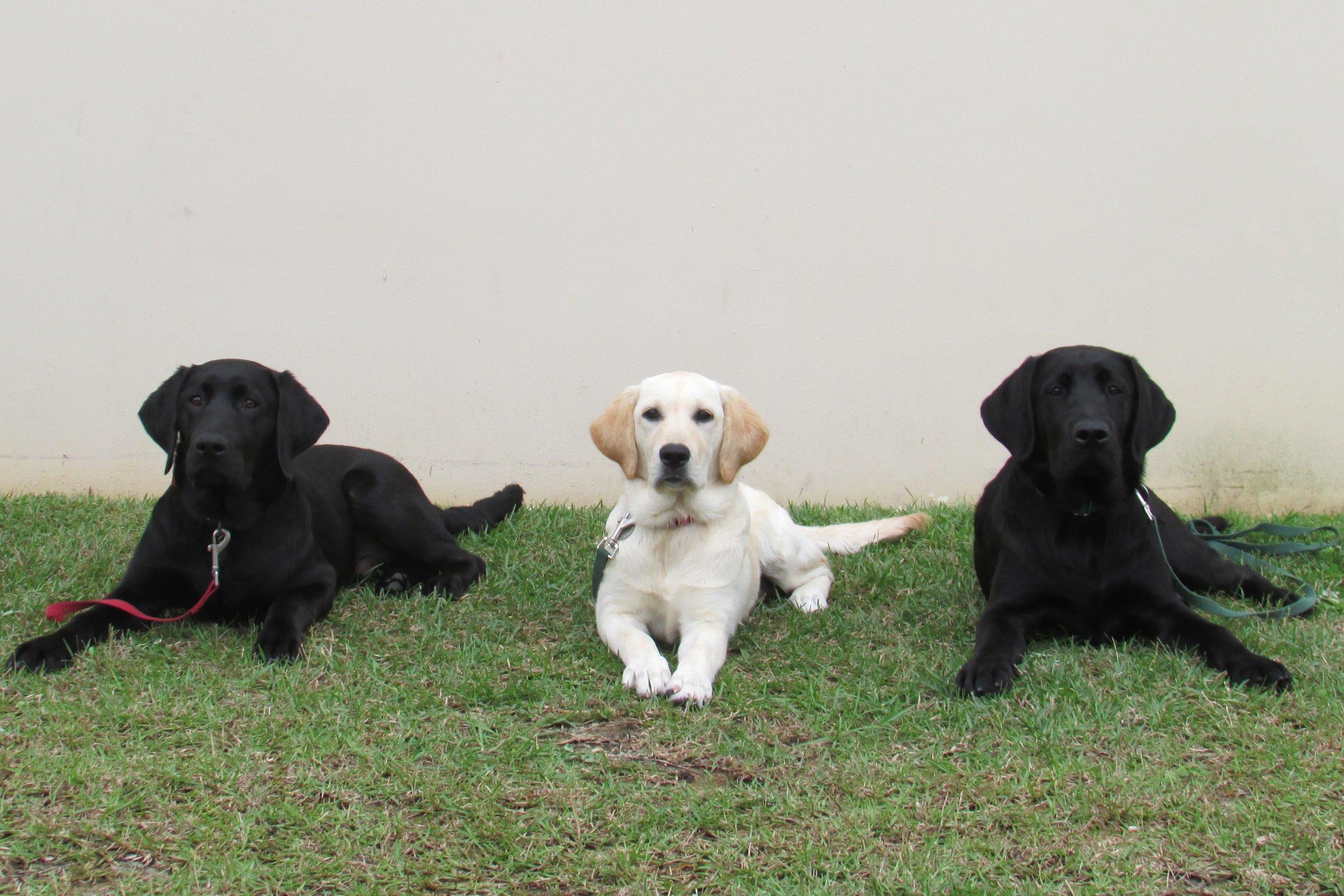 110315 Bravo Dogs (5).JPG
