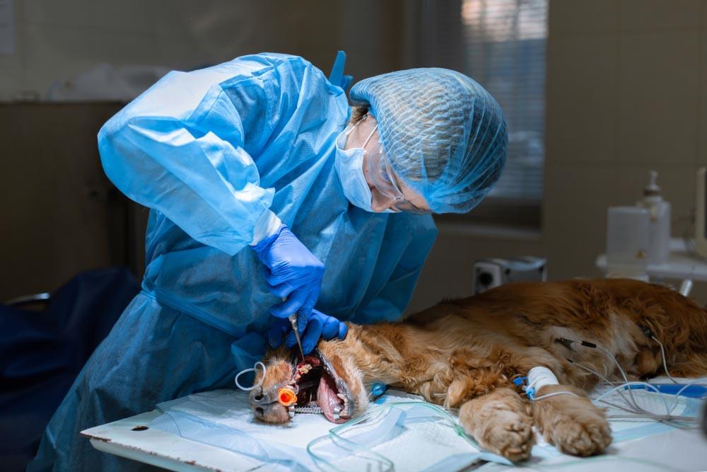 Veterinary Medical Service in Pensacola.jpg