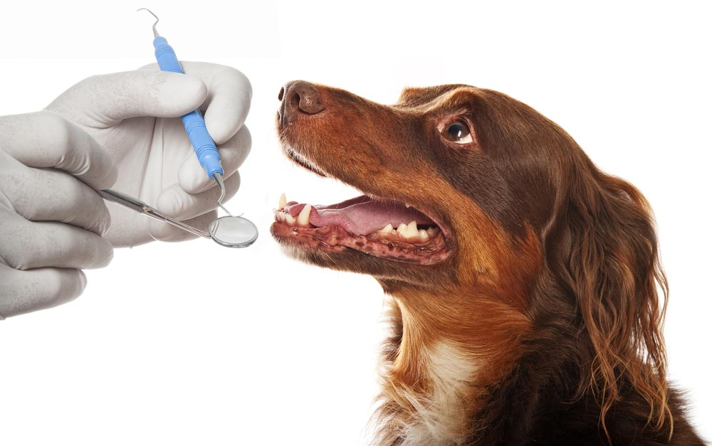 Pet Dentistry In Pensacola.jpg