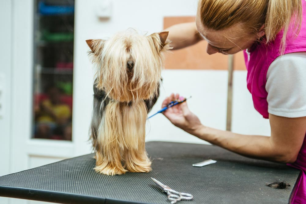 Pet Grooming Spa and Salon in Pensacola.jpg