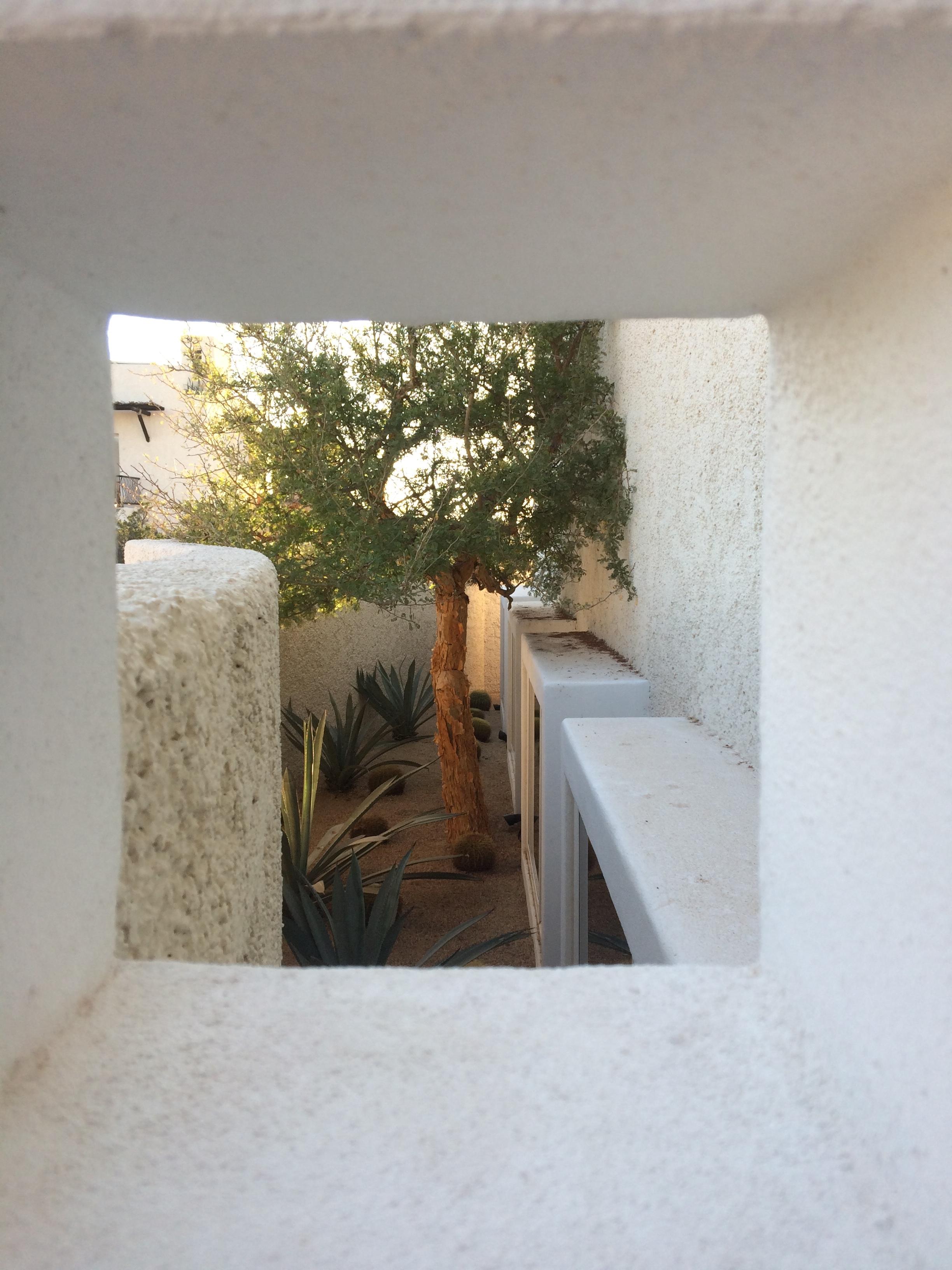 Outside the moon studio, a sweet, hidden desert topiary.