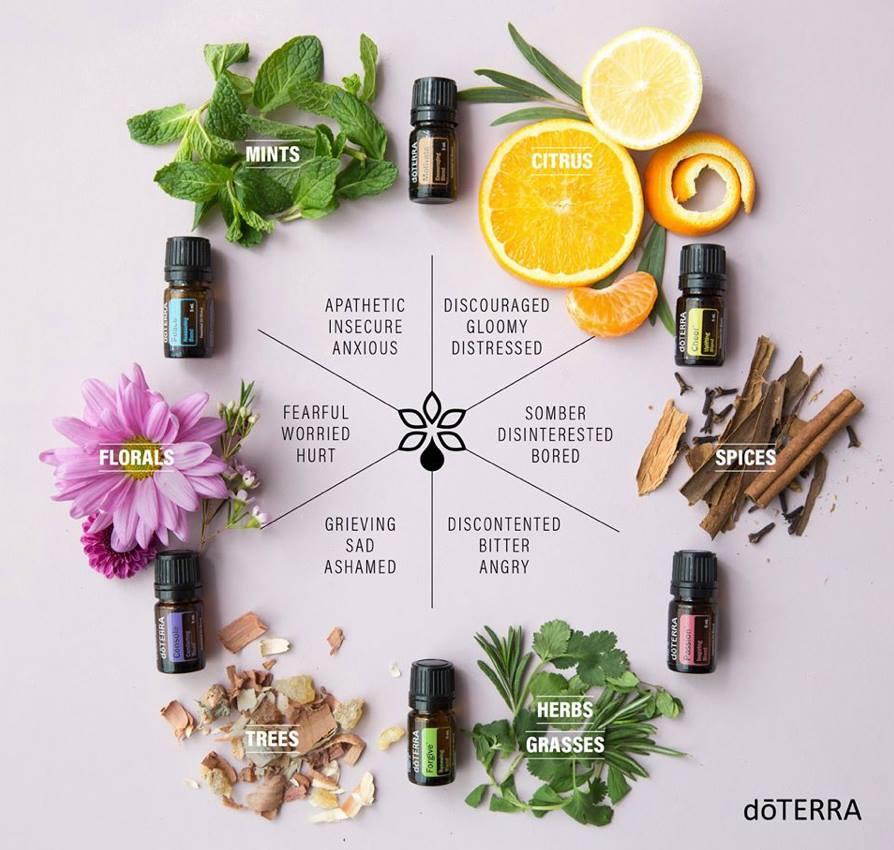 doTERRA Yoga Collection Essential Oils