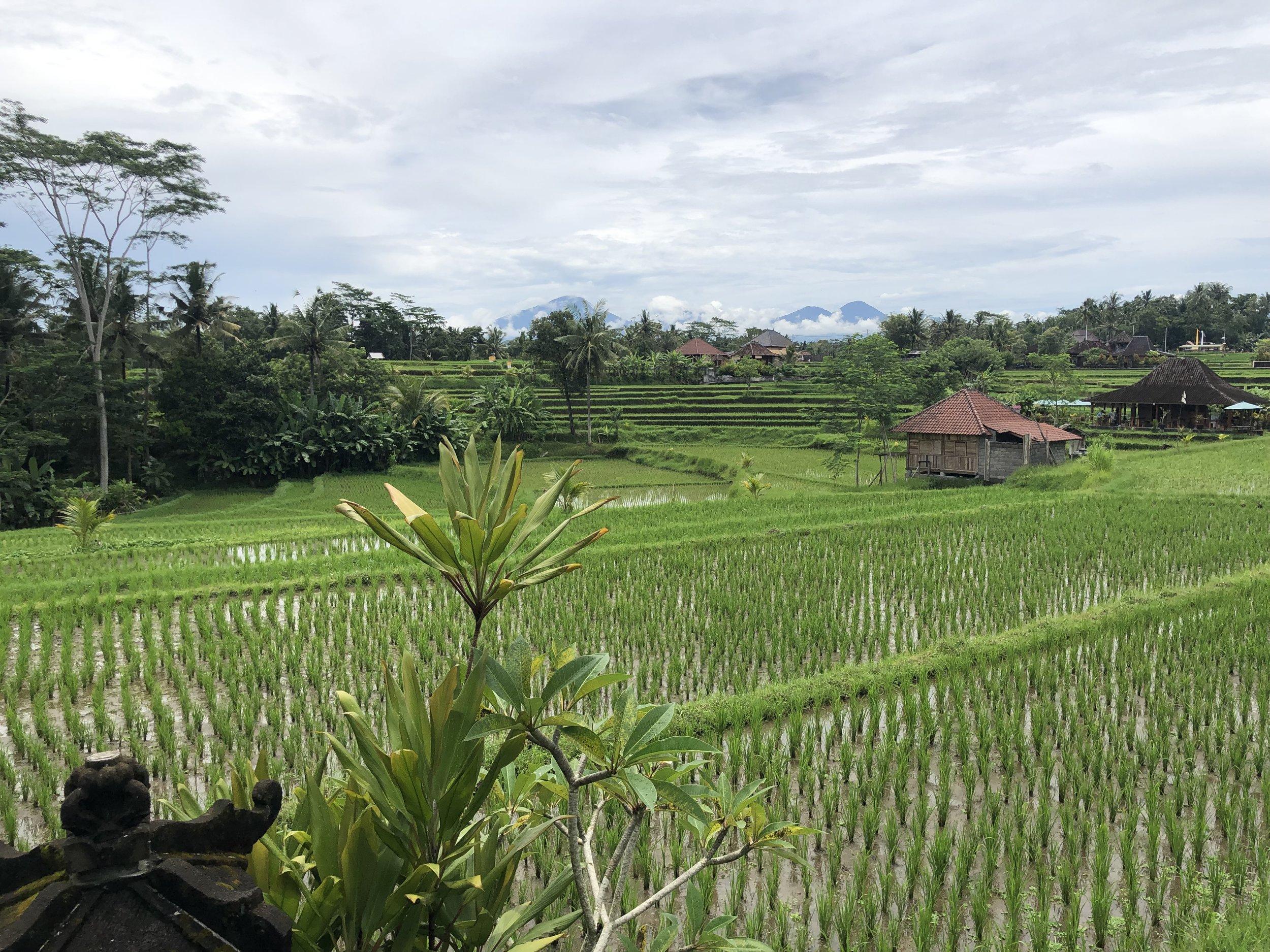 Rice paddies around Karsa Spa