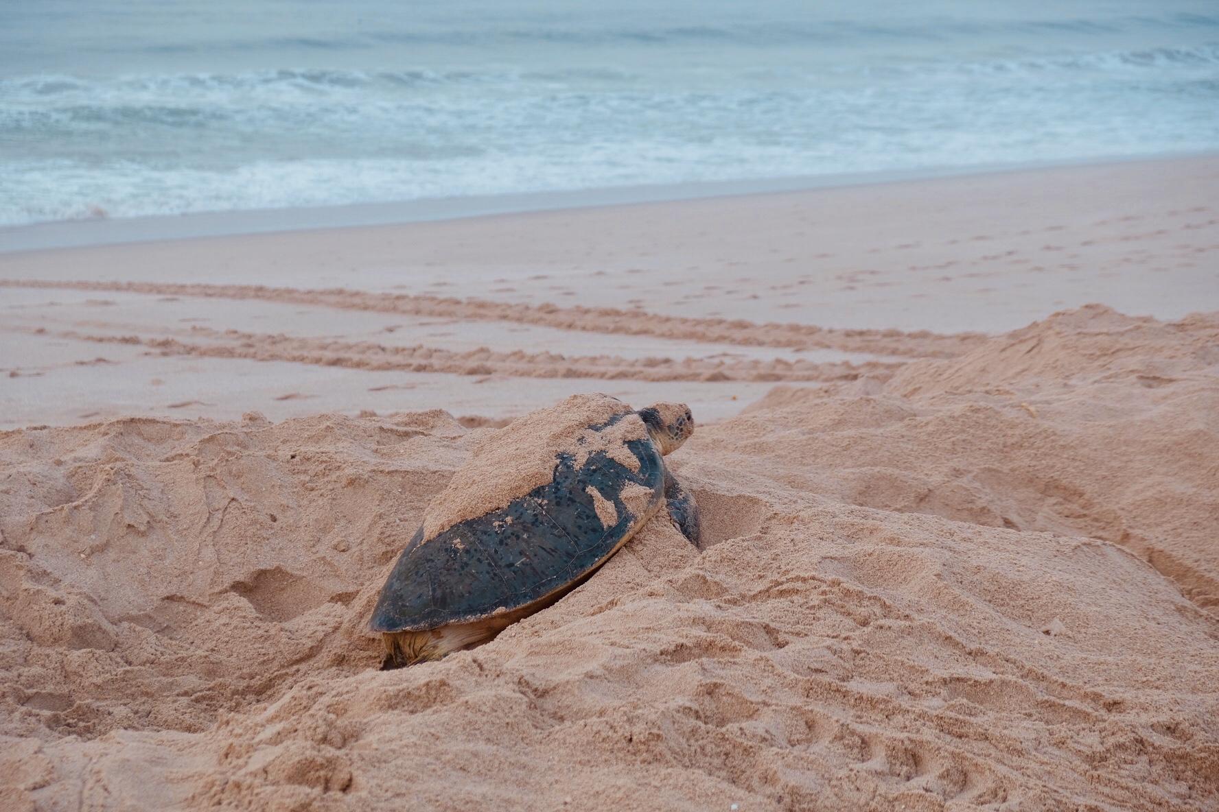 TurtleReserve