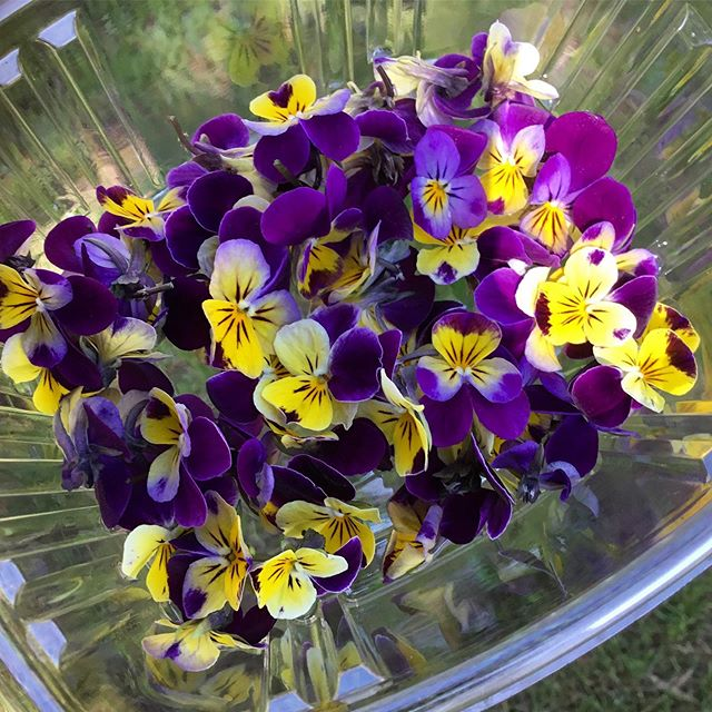 We grow the most beautiful edible flowers in Spokane. Find these gems @casperfry . #spokane #flavorbeautyhealth #deeporganicfarming #edibleflowers #kitchenfarm #handshakelocal #gourmet #realfood #knowyourfarmer #iamamodernfarmer #outsideragriculture