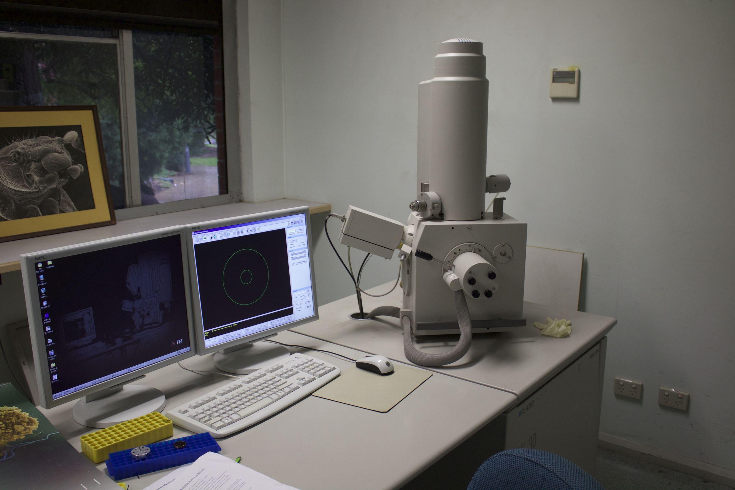 Scanning Electron Microscope (SEM)