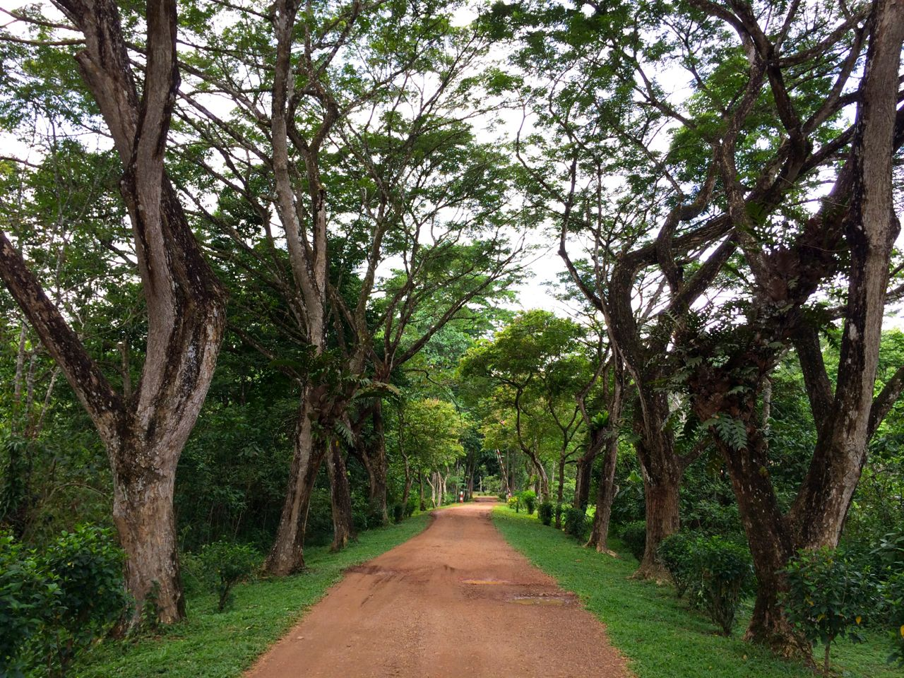 The avenue entrance to Tabin Wildlife Resort, Sabah, Borneo