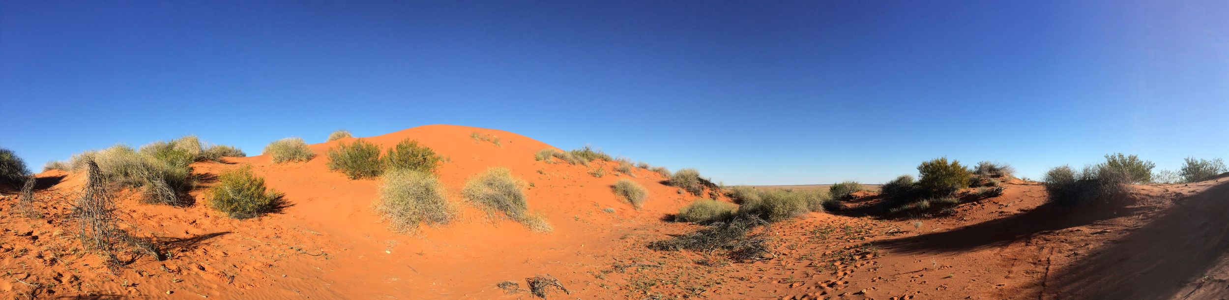 Vegetated sand dunes, Simpson Desert, NT