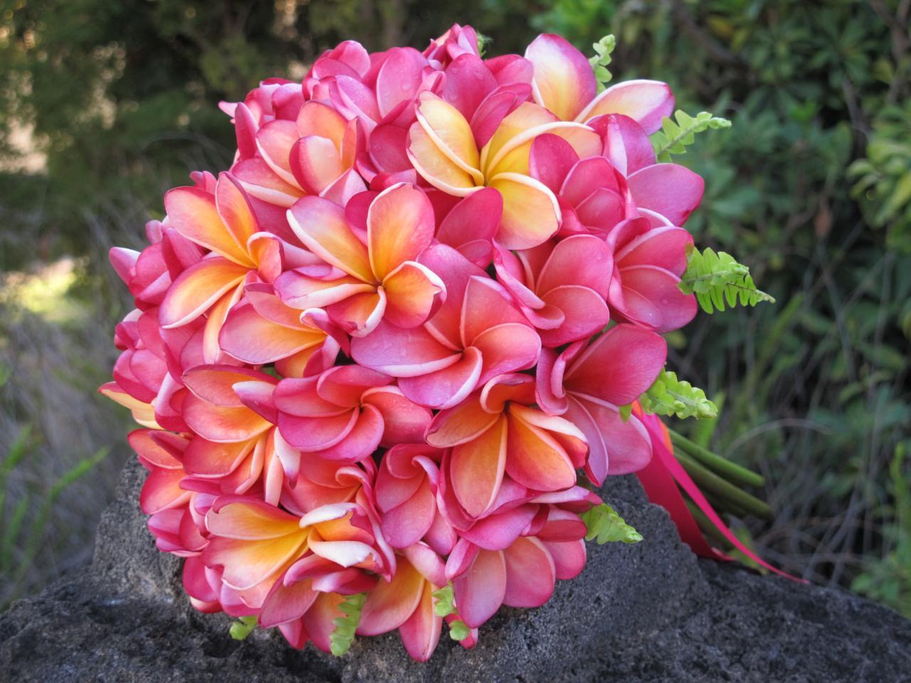 PC: LHFD  Plumeria Bouquet - Season: Mid May - November