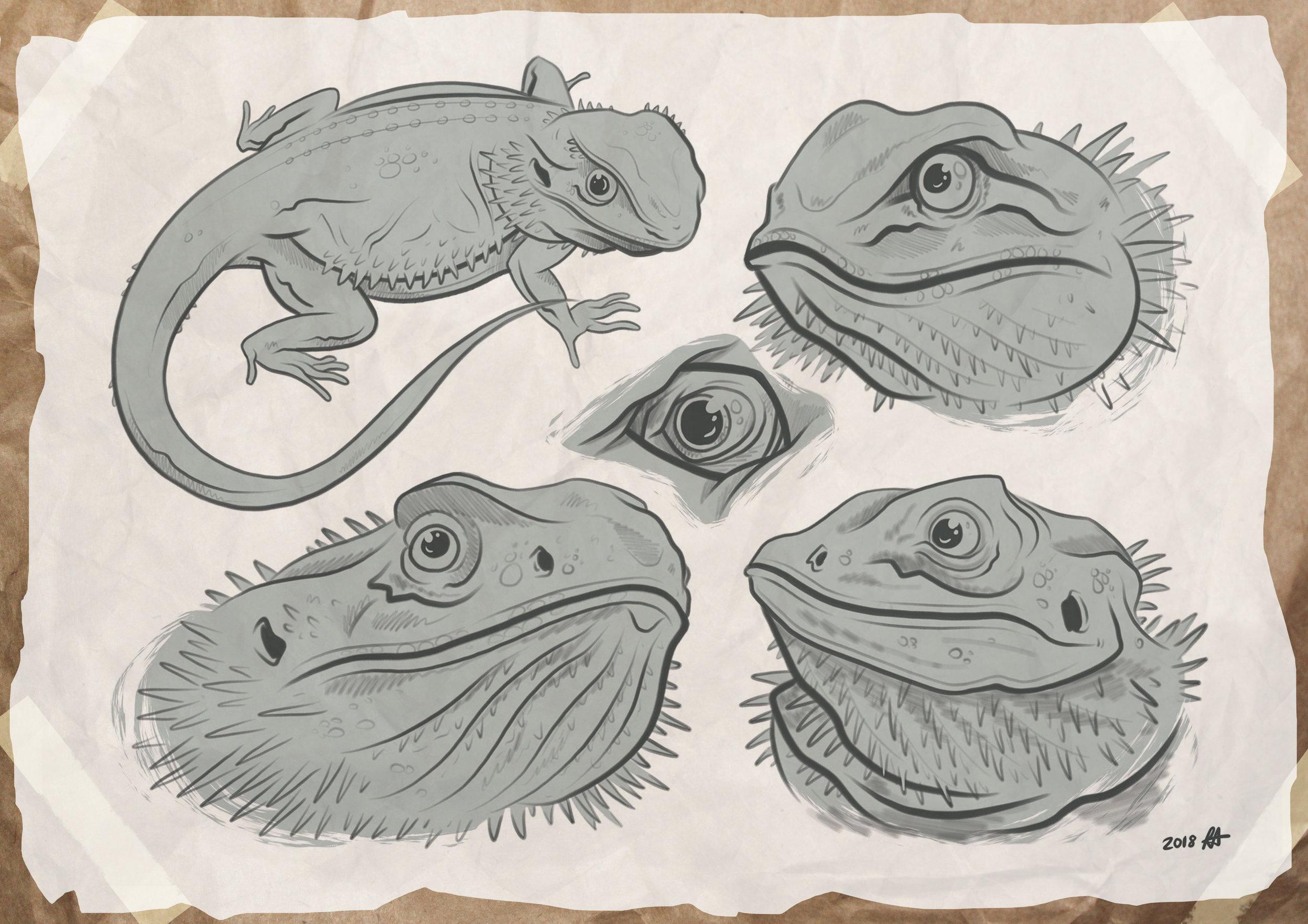 bearded_dragon_sketches.jpg