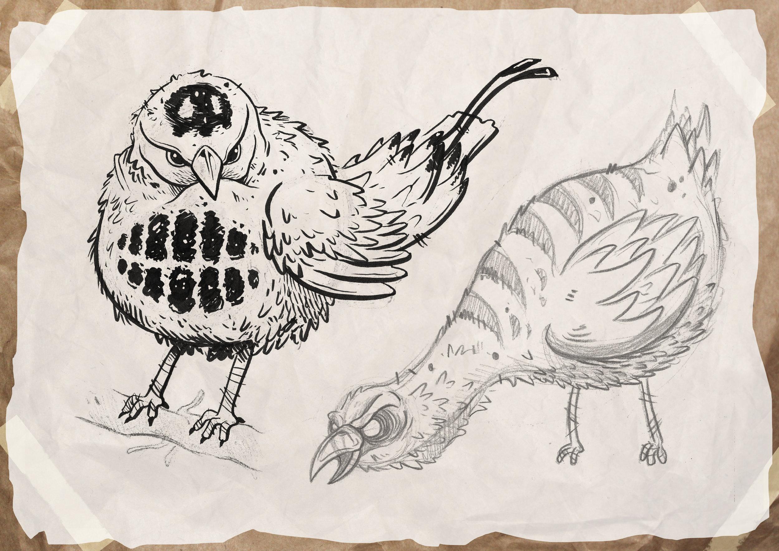 bird_sketches.jpg