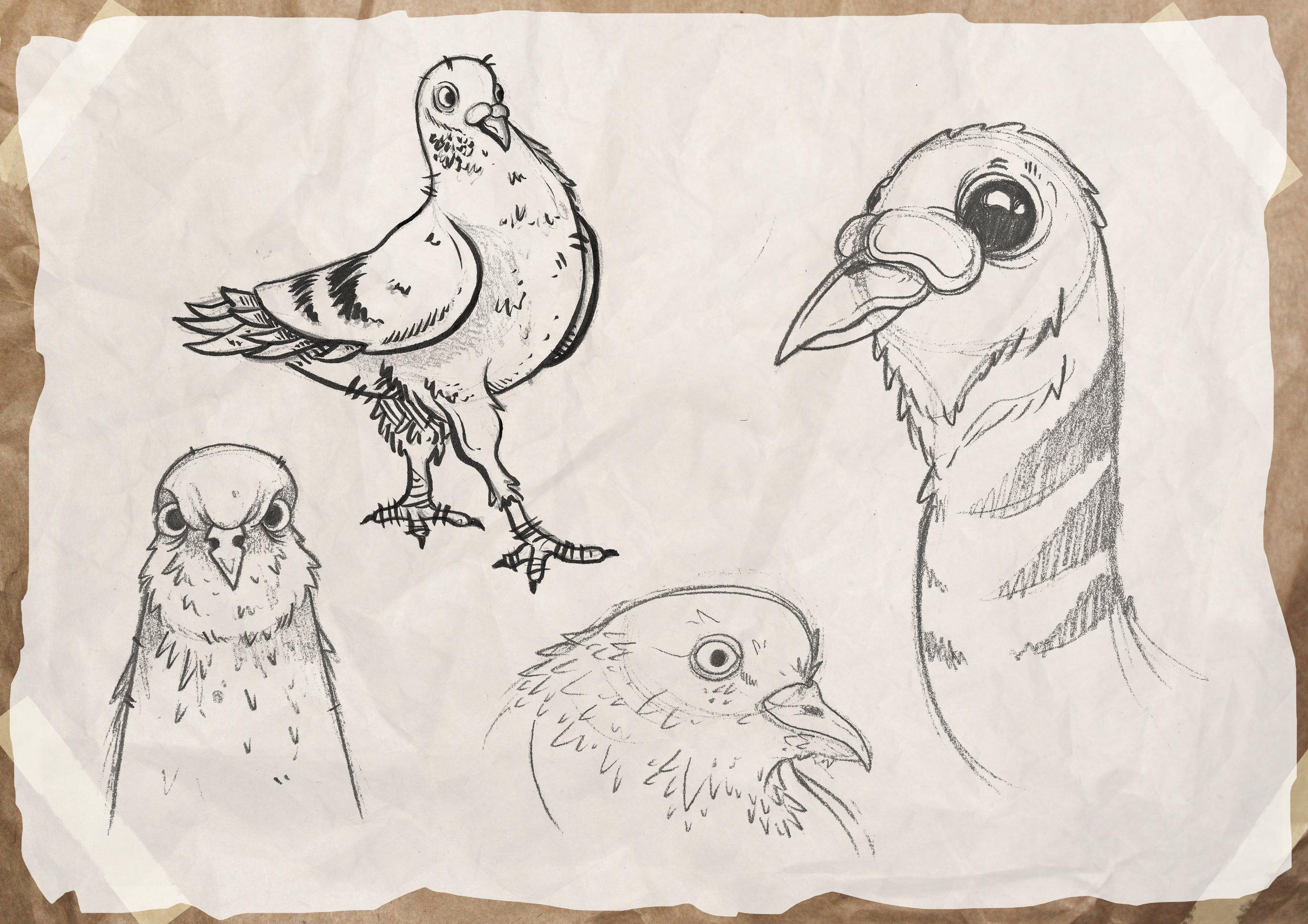 pigeon_sketches.jpg