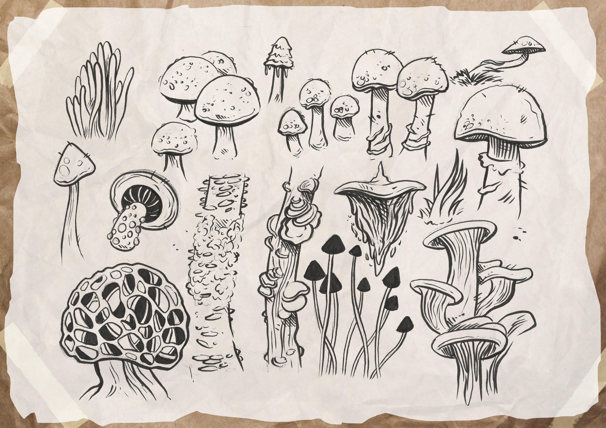 Mushroom_studies.jpg