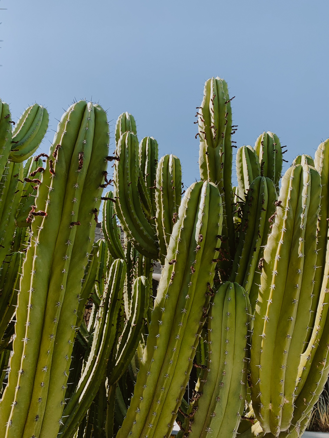 ace_hotel_palm_springs_cactus.jpg