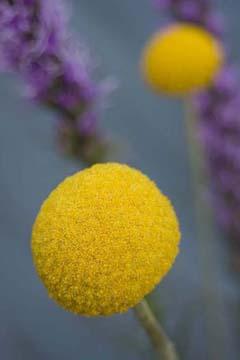 yellowonblue.jpg